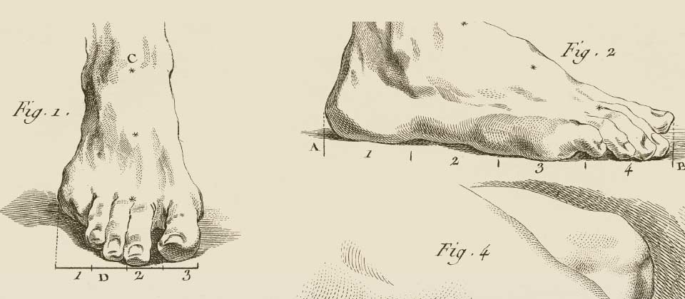 Illustration of feet